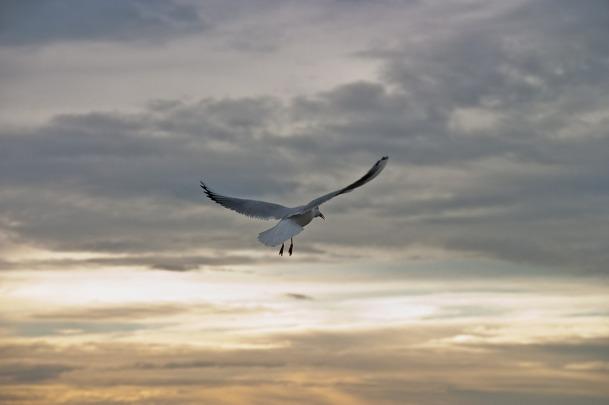 seagull-422079_1280